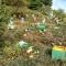 Горските от Гоце Делчев ще хранят мечките за да не нападат кошерите в Тешово и Ловча