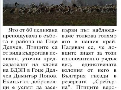 Пеликани край река Места