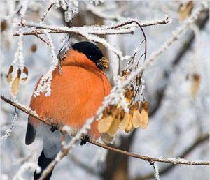 Започва зимното преброяване на птиците