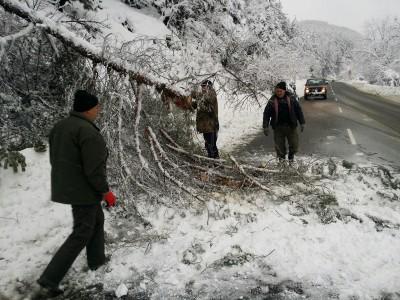 Горски разчистват пътя между Добринище и Гоце Делчев от паднали дървета