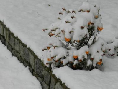 Честит първи сняг… през март!