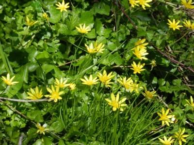 Пролетно почистване в Гоце Делчев до 9 април