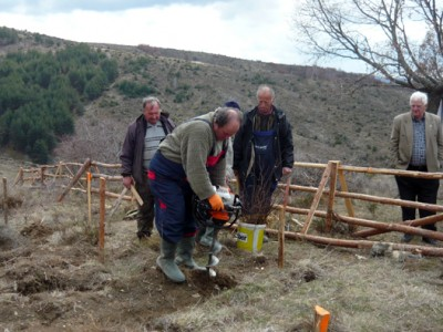 1500 декара – нови гори, наесен още 320 декара с тополи