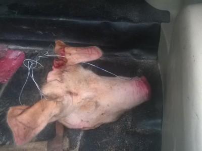 Свинска глава на минарето на старата джамия в Гоце Делчев в началото на месеца Рамазан