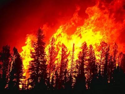 Проект, който ще осигури наблюдение срещу пожари върху 42 648 хектара горски площи