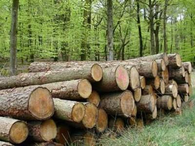Първите търгове за добив на дървесина старират в петък, от ЮЗДП обещават прозрачност