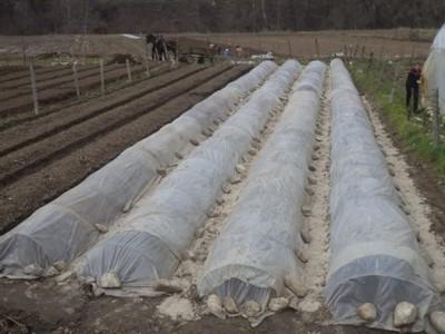 Изкупиха и последните максули с тютюн в района, предлагат договори и семена за новата реколта