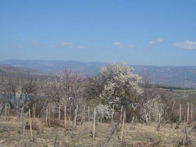 Строги мерки и глоби за безотговорни пастири в полето край Гоце Делчев