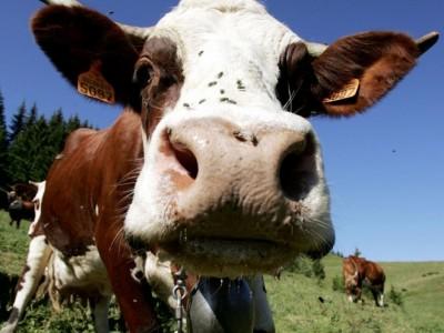 В Гоце Делчев забраниха продажбата на животни, заради заразна болест в съседния град Серес