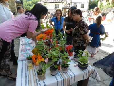 Благотворителен базар на билки и подправки организира на Еньовден в село Делчево сдружение Хроника срещу рака