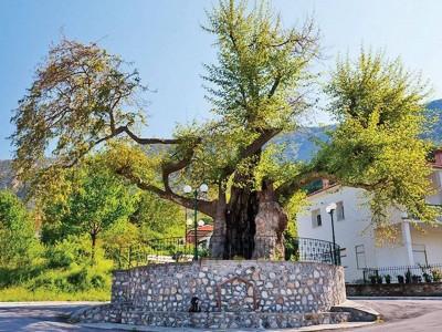 Калапотска среща на земляци и потомци организират в град Гоце Делчев