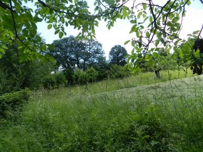 Земеделската земя под наем край Гоце Делчев е най-скъпа в областта