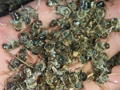 Пръскането срещу комари в полето над Гоце Делчев, Гърмен и Хаджидимово продължава