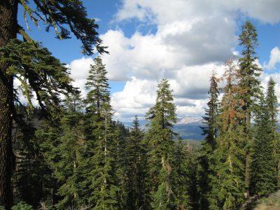 Започва прием на документи за закупуване на малки горски имоти