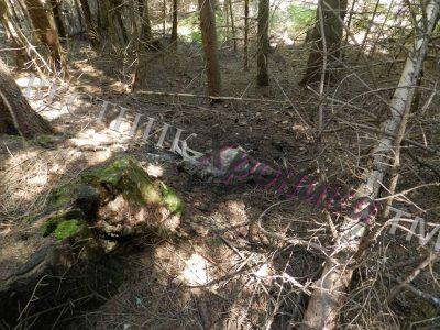 Хищници върлуват в планински села и местности по границата с Гърция