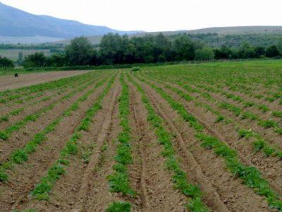 Важен срок за земеделските стопани от Гоце Делчев и Мосомище