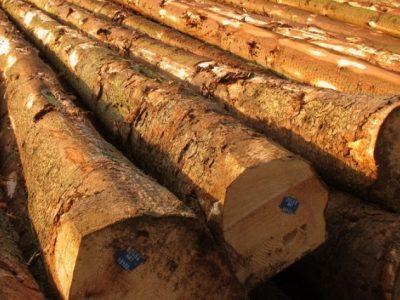 """С електронен търг ще продават дървесина от """"ДЛС Дикчан"""" – Сатовча, зам. министър ще следи лично процеса"""