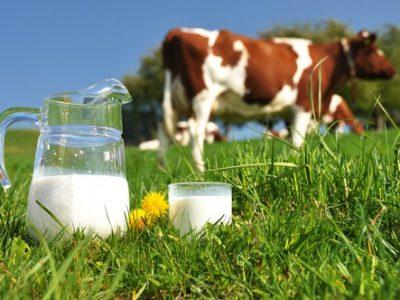 Безумно: Ще плащат пари на животновъдите да НЕ произвеждат мляко