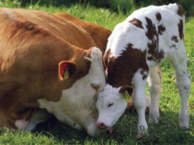 Важно за животновъдите! От днес се подават документи за помощ de minimis