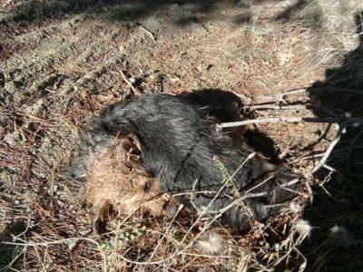 Не разхождайте кучетата си край парк Панорамата, дебне ги отрова
