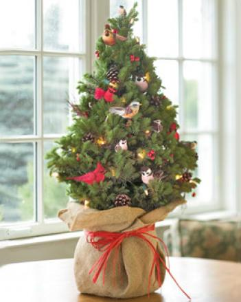 live-decorated-spruce-tree1