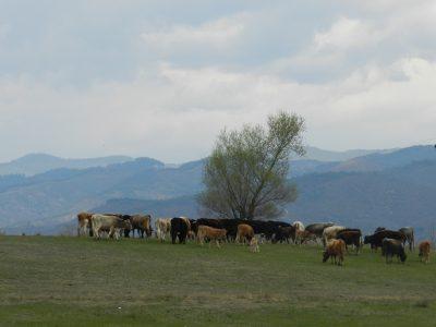 Отдават се под наем 41 общински земеделски имота край Гоце Делчев