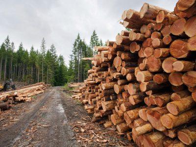 Задържаха камион с незаконна дървесина край село Плетена