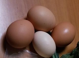 Поскъпнаха яйцата и млечните продукти в Гоце Делчев
