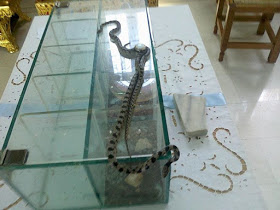 Едно странно явление със змии на остров Кефалония в Гърция