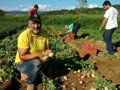 Добра реколта от картофи в Неврокопско и Гръцко, тешовският боб стигна 6 лева килото