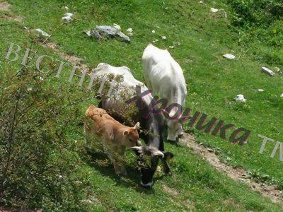 От днес животновъдите могат да подават документи за подпомагане по схемата  de minimis