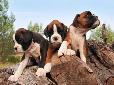 Неврокопчани трябва да регистрират до края на месеца кучета си – домашни любимци