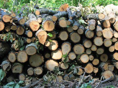 В Гърмен са съставени най-много актове за кражби на дърва и дървесина