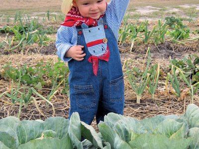 Започна приемът по дълго чаканата подмярка за млади земеделци