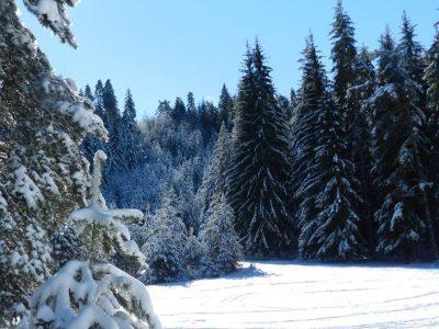 Собственици на горски територии могат да кандидатстват за финансиране по Програмата за развитие на селските райони