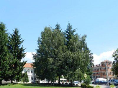 12 безработни започнаха работа в град Гоце Делчев по програмите за временна заетост