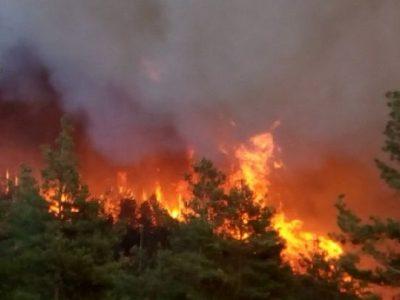 От Югозападното предприятие припомнят, че човешката небрежност е основна причина за пожари в горите