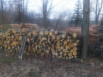 Министър Порожанов препоръча на директорите на горските стопанства два пъти месечно да се срещат с кметовете по места във връзка с добива и доставката на дърва за огрев