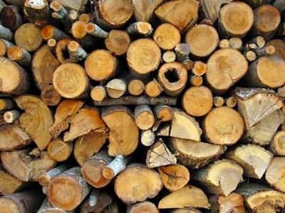 10 акта за незаконни дейности в горите на Югозапада, три от тях са в Гърмен и един в Корница