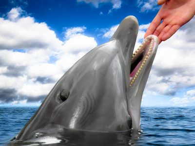 Млад мъж от Комотини спаси делфин