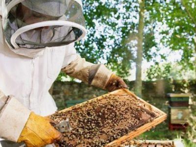 Започва прием на документи за подпомагане на пчеларите