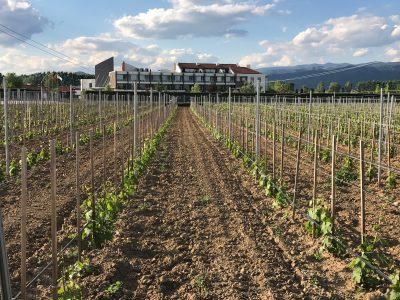 Производители на вино от цяла България и международни експерти обмениха опит в Uva Nestum Wine & SPA
