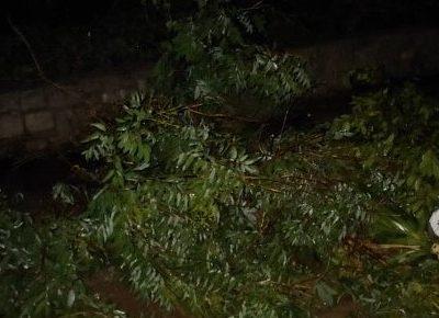 Счупено дърво и две крави са жертва на снощната буря в град Гоце Делчев