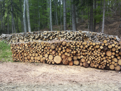 """Най-много се купуват дърва за огрев """"на корен"""" от жителите на Сатовчанско и Гърменско"""