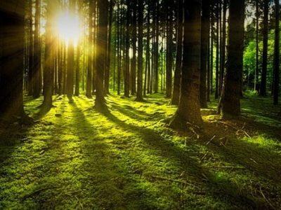 Вижте кое дърво е вашият духовен символ според рождения ден