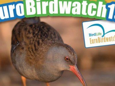 И  тази година еколюбители от Гоце Делчев ще се включат в Европейските дни на птиците