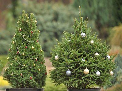 """Коледни дръвчета се продават в Гоце Делчев, в подкрепа на благотворителнатата кампания """"Подари надежда"""""""