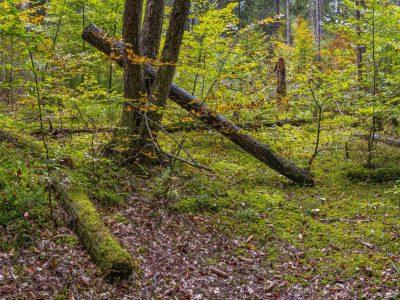 В Гоце Делчев и региона няма желаещи да продават частни гори