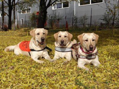Клуб Магис организира в градския парк на Гоце Делчев демонстрация на кучета водачи