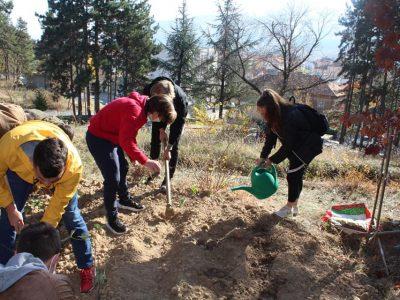 Млади хора от Гоце Делчев засадиха дръвчета за 100 годишнината на своето училище